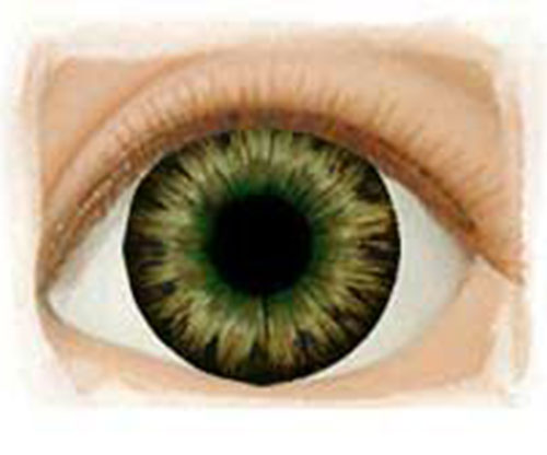 Real Eyes 20mm Dark Brown Green