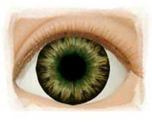 Real Eyes 24mm Dark Brown Green