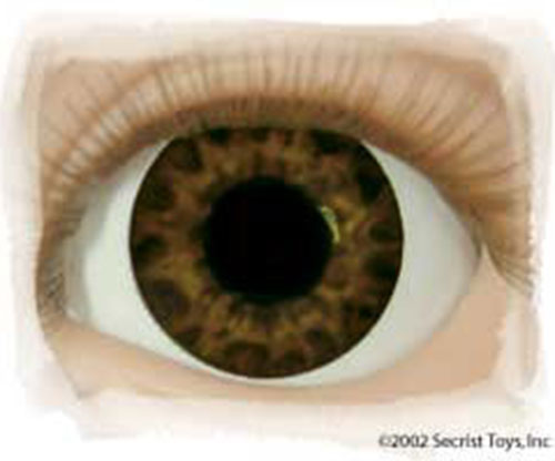 Real Eyes 16mm Tiger Brown